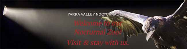 yarra valley nocturnal zoo